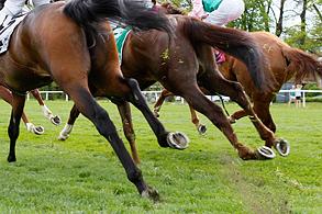 Symbolbild Pferdebeine © turfstock.com