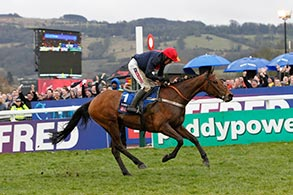 Bobs Worth in Cheltenham 2013. @ turfstock.com