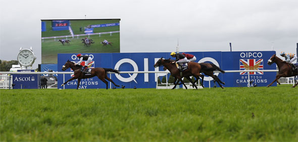 18.10.2014 - Ascot; Forgotten Rules, ridden by Pat Smullen wins the Qipco British Champions Long Distance Cup (Group 2). Second place: Biographer, ridden by George Baker (yellow cap). Third place: Pallasator, ridden by Andrea Atzeni (red silks). Credit: Lajos-Eric Balogh/turfstock.com