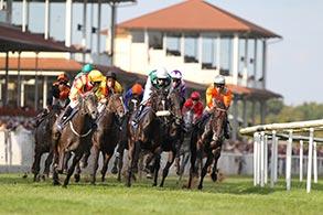 Die Pferde und Jockeys im Rennen