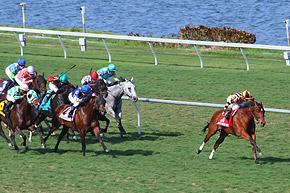 Impressionen Florida Derby Tag by K.L.Fabris/ragazin.com
