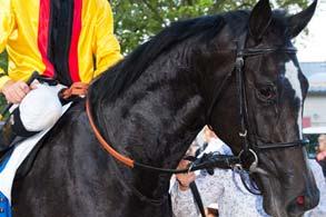 turfstock.com galopper foto hier rein