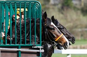 Pferde starten zum Rennen