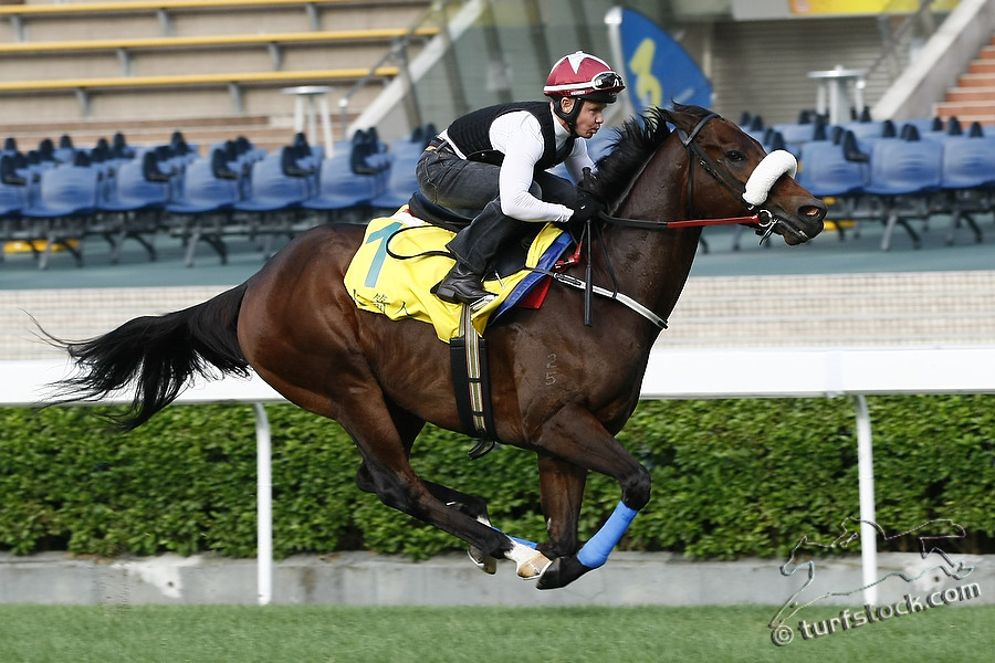 07. Dec. 2011 - Sha Tin Racecourse; Rocket Man during the morning track work at Sha Tin Racecourse. Credit: Lajos-Eric Balogh/turfstock.com