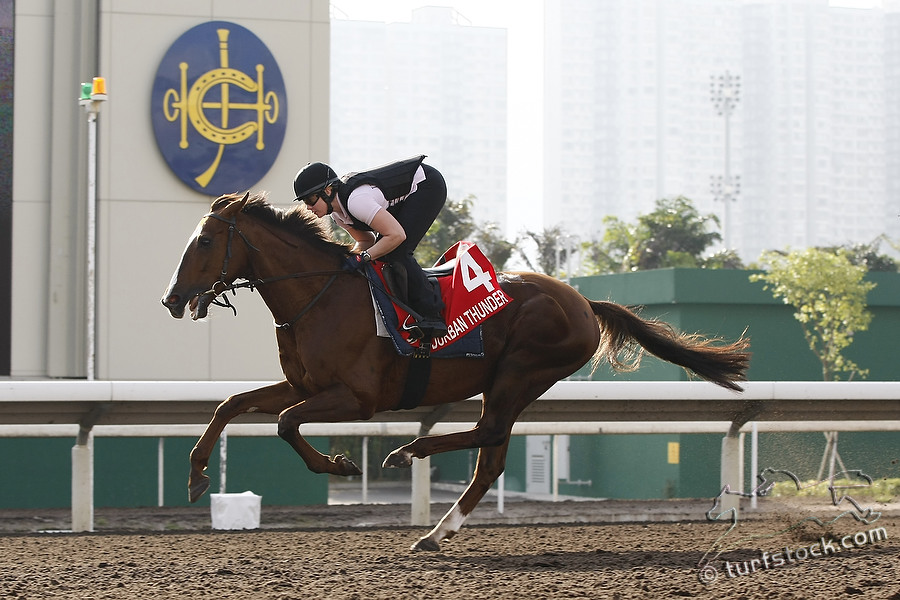 07. Dec. 2011 - Sha Tin Racecourse; Durban Thunder, ridden by Annika Rosenbaum during the morning track work at Sha Tin Racecourse. Credit: Lajos-Eric Balogh/turfstock.com
