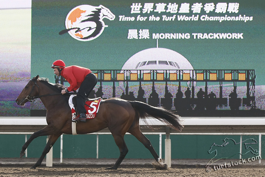 07. Dec. 2011 - Sha Tin Racecourse; Zazou during the morning track work at Sha Tin Racecourse. Credit: Lajos-Eric Balogh/turfstock.com