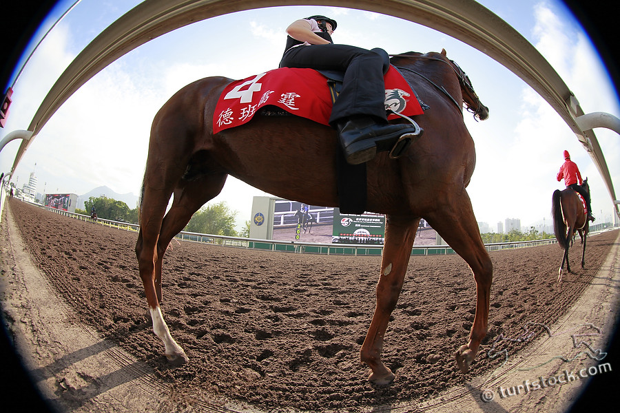 07. Dec. 2011 - Sha Tin Racecourse; View from the bottom; Durban Thunder during the morning track work at Sha Tin Racecourse. Credit: Lajos-Eric Balogh/turfstock.com