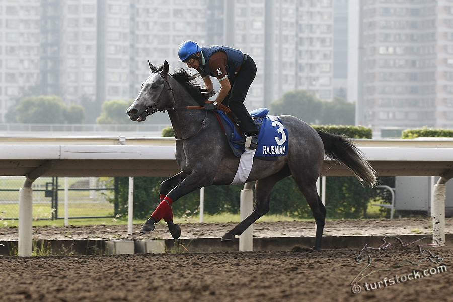 07. Dec. 2011 - Sha Tin Racecourse; Rajsaman during the morning track work at Sha Tin Racecourse. Credit: Lajos-Eric Balogh/turfstock.com