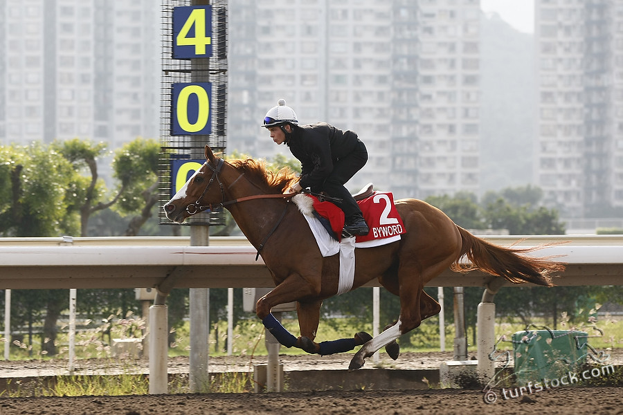 07. Dec. 2011 - Sha Tin Racecourse; Byword, ridden by Maxime Guyon during the morning track work at Sha Tin Racecourse. Credit: Lajos-Eric Balogh/turfstock.com