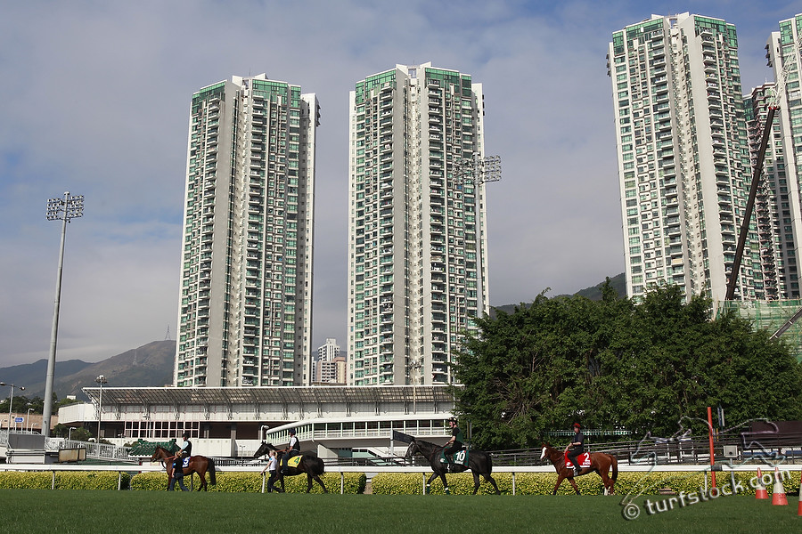 07. Dec. 2011 - Sha Tin Racecourse; Impressions: Training of racehorses in front of the skyscrapers in Hongkong. Credit: Lajos-Eric Balogh/turfstock.com