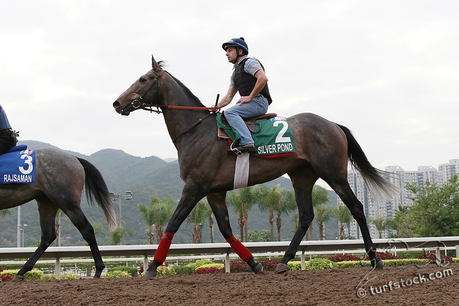08. Dec. 2011 - Sha Tin Racecourse; Silver Pond during the morning track work at Sha Tin Racecourse. Credit: Lajos-Eric Balogh/turfstock.com