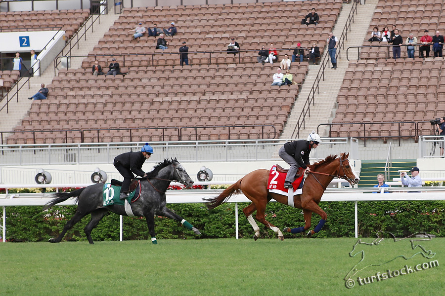 08. Dec. 2011 - Sha Tin Racecourse; Byword, ridden by Maxime Guyon (No.2) and Vadamar, ridden by Christophe Lemaire (No.10) during the morning track work at Sha Tin Racecourse. Credit: Lajos-Eric Balogh/turfstock.com