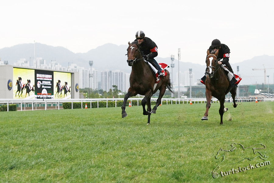 09. Dec. 2011 - Sha Tin Racecourse; Zazou, ridden by Olivier Peslier (left) and Durban Thunder, ridden by Andrasch Starke during the morning track work at Sha Tin Racecourse. Credit: Lajos-Eric Balogh/turfstock.com