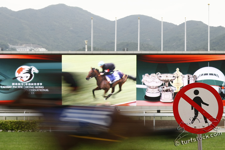 09. Dec. 2011 - Sha Tin Racecourse; Feature: Galloping horse past a shield (Dont cross the track) at Sha Tin Racecourse. Credit: Lajos-Eric Balogh/turfstock.com