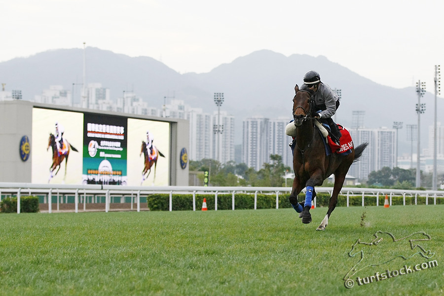 09. Dec. 2011 - Sha Tin Racecourse; Cirrus des Aigles, during the morning track work at Sha Tin Racecourse. Credit: Lajos-Eric Balogh/turfstock.com