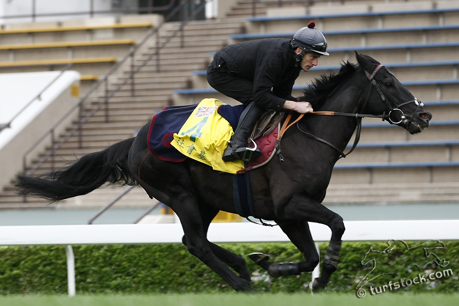 09. Dec. 2011 - Sha Tin Racecourse; Society Rock, ridden by Johnny Murtagh during the morning track work at Sha Tin Racecourse. Credit: Lajos-Eric Balogh/turfstock.com