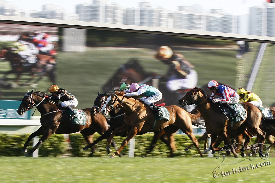 11. Dec. 2011 - Sha Tin Racecourse; Able One, ridden by Jeff Lloyd wins the Cathay Pacific Hong Kong Mile - Group 1 (Turf). Second place: Cityscape, ridden by Steve Drowne (pink cap). Third place: Xtension, ridden by Darren Beadman (green cap). Credit: Lajos-Eric Balogh/turfstock.com