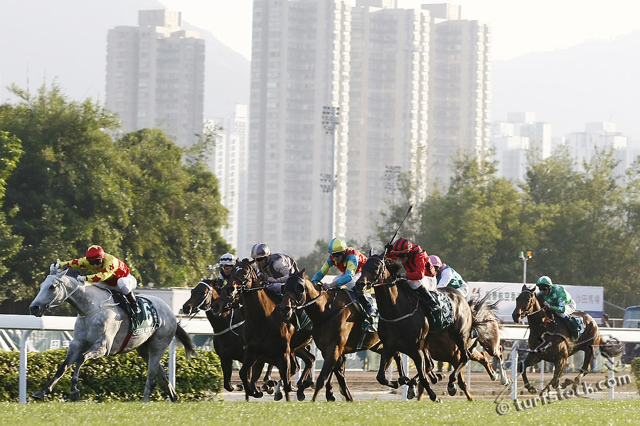11. Dec. 2011 - Sha Tin Racecourse; California Memory, ridden by M Chadwick wins the Cathay Pacific Hong Kong Cup - Group 1 (Turf). Second place: Irian, ridden by Darren Beadman (red cap). Third place: Zazou, ridden by Olivier Peslier (golden cap). Credit: Lajos-Eric Balogh/turfstock.com