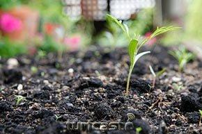 Symboldbild kleine Pflanze. © turfstock.com/Balogh