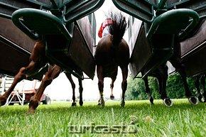 Symbolbild Pferdebeine am Start. © turfstock.com/Balogh
