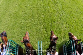 Symbolbild Start. © turfstock.com/Balogh