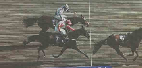 15.03.2017 - Cheltenham; Impressions of the 2017 Cheltenham Festival - Day two at Cheltenham-Racecourse/Great Britain.: Photofinish in the RSA Novices' Chase (Grade 1) between Might Bite ridden by Nico de Boinville (No. 7) and Whisper ridden by Davy Russell. Might Bite ridden by Nico de Boinville (No. 7) winning the RSA Novices' Chase (Grade 1). Second place: Whisper ridden by Davy Russell. Credit: Lajos-Eric Balogh/turfstock.com